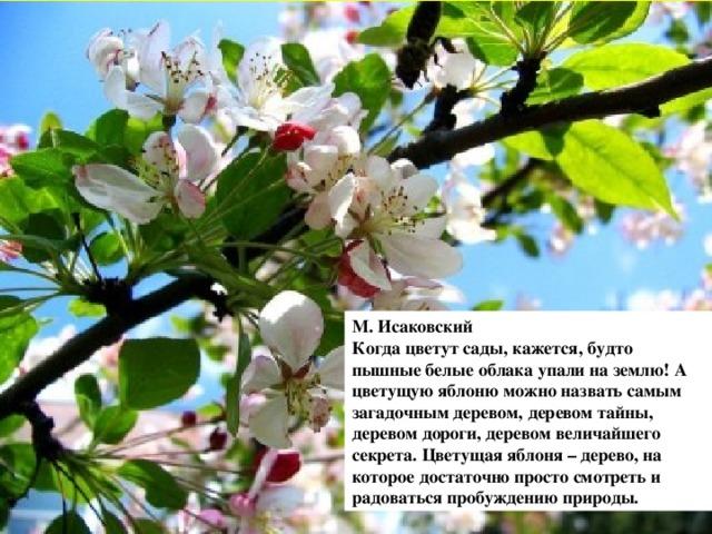 Маршал Анекдот Яблони В Цвету Видео