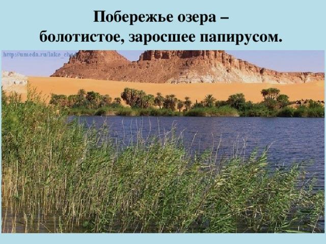 Побережье озера –  болотистое, заросшее папирусом.