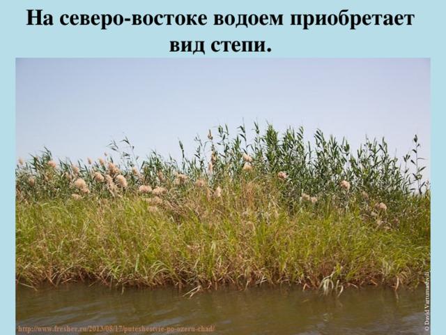 На северо-востоке водоем приобретает  вид степи.