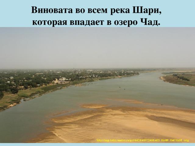 Виновата во всем река Шари,  которая впадает в озеро Чад.