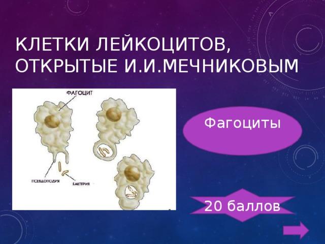КЛЕТКИ ЛЕЙКОЦИТОВ, ОТКРЫТЫЕ И.И.МЕЧНИКОВЫМ Фагоциты 20 баллов