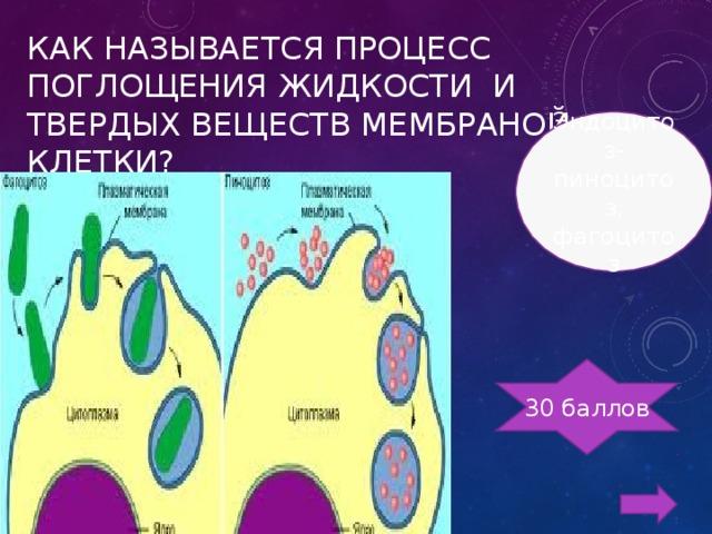 КАК НАЗЫВАЕТСЯ ПРОЦЕСС ПОГЛОЩЕНИЯ ЖИДКОСТИ И ТВЕРДЫХ ВЕЩЕСТВ МЕМБРАНОЙ КЛЕТКИ? Эндоцитоз-пиноцитоз, фагоцитоз 30 баллов