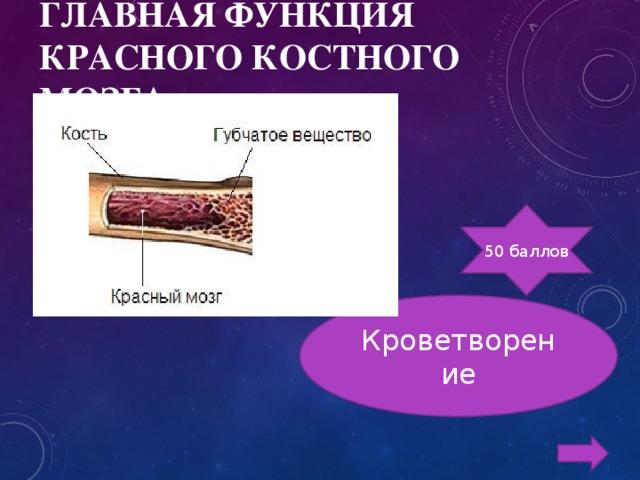 ГЛАВНАЯ ФУНКЦИЯ КРАСНОГО КОСТНОГО МОЗГА 50 баллов Кроветворение