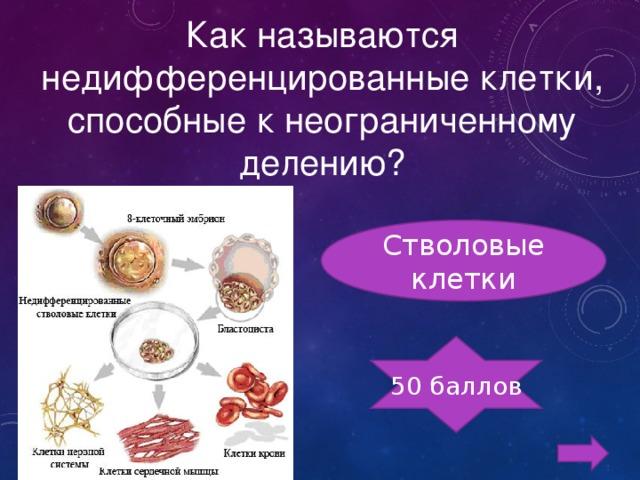 Как называются недифференцированные клетки, способные к неограниченному делению? Стволовые клетки 50 баллов