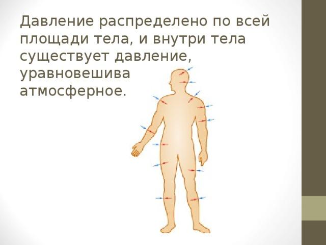 Давление распределено по всей площади тела, и внутри тела существует давление, уравновешивающее атмосферное.