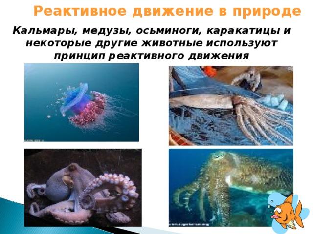 Реактивное движение в природе Кальмары, медузы, осьминоги, каракатицы и некоторые другие животные используют принцип реактивного движения
