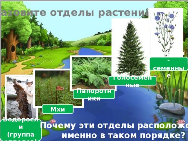 Назовите отделы растений Покрыто-семенные Голосеменные Папоротники Мхи Почему эти отделы расположены именно в таком порядке? Водоросли (группа отделов)