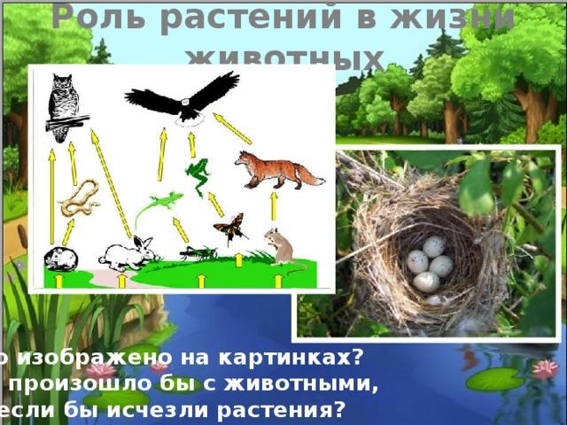 Роль растений в жизни животных Что изображено на картинках? Что произошло бы с животными,  если бы исчезли растения?