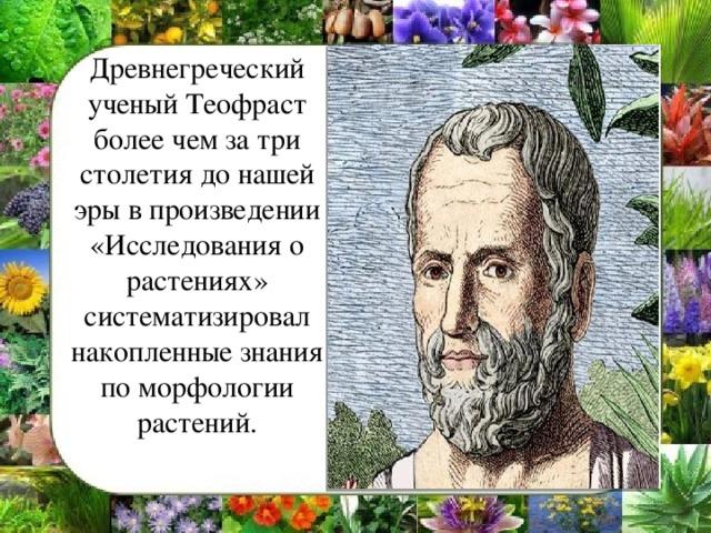 Древнегреческий ученый Теофраст более чем за три столетия до нашей эры в произведении «Исследования о растениях» систематизировал накопленные знания по морфологии растений.