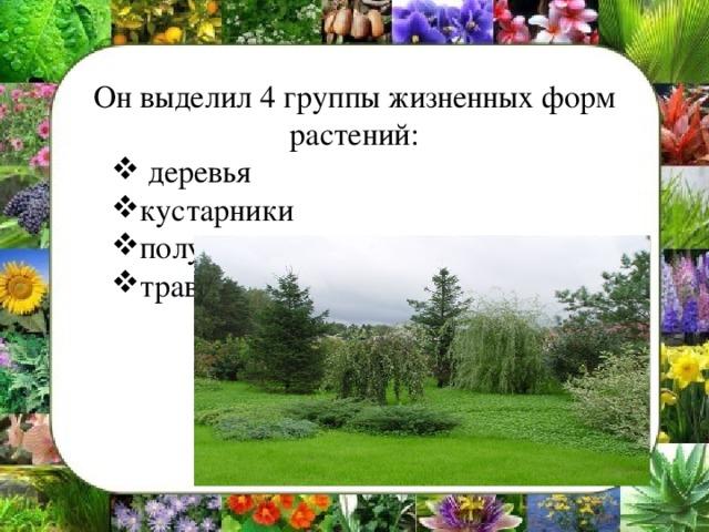 Он выделил 4 группы жизненных форм растений: