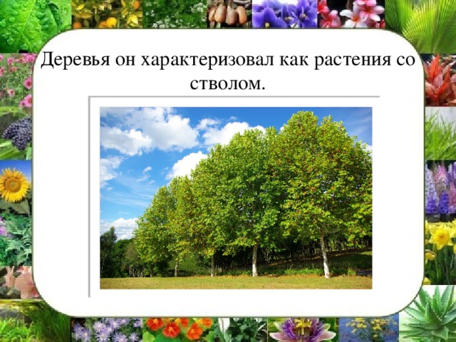 Деревья он характеризовал как растения со стволом.
