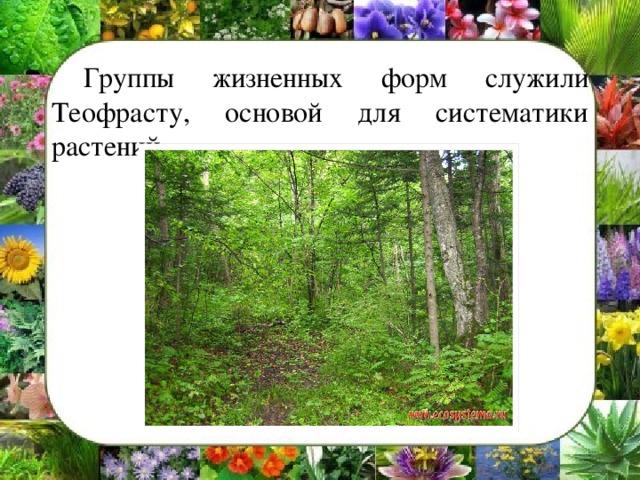 Группы жизненных форм служили Теофрасту, основой для систематики растений.
