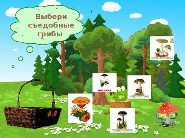 Выбери съедобные грибы