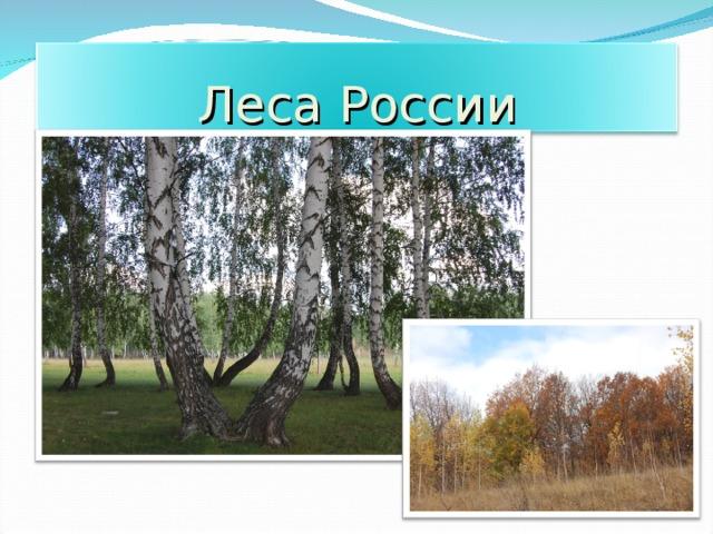Леса России 17
