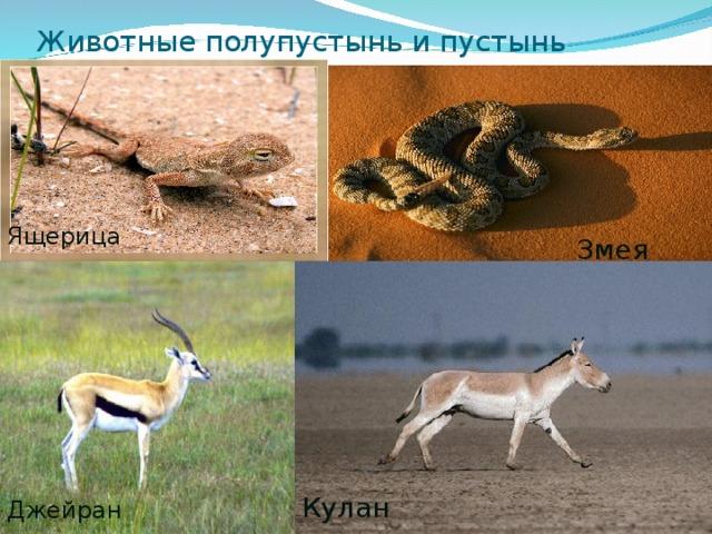 Животные полупустынь и пустынь Ящерица Змея Кулан Джейран