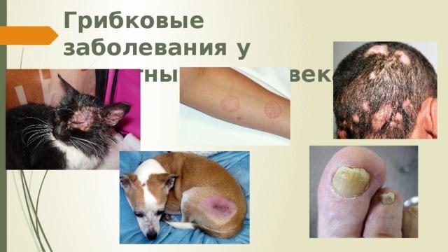 Грибковые заболевания у животных и человека