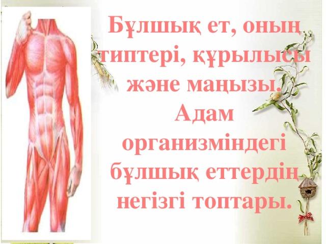 Бұлшық ет, оның типтері, құрылысы және маңызы. Адам организміндегі бұлшық еттердің негізгі топтары.