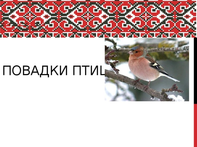 Повадки птиц