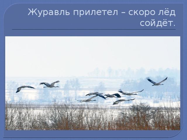 Журавль прилетел – скоро лёд сойдёт.
