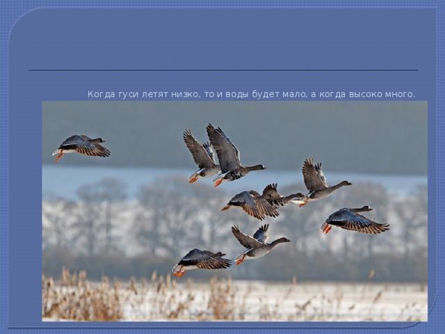 Когда гуси летят низко, то и воды будет мало, а когда высоко много.