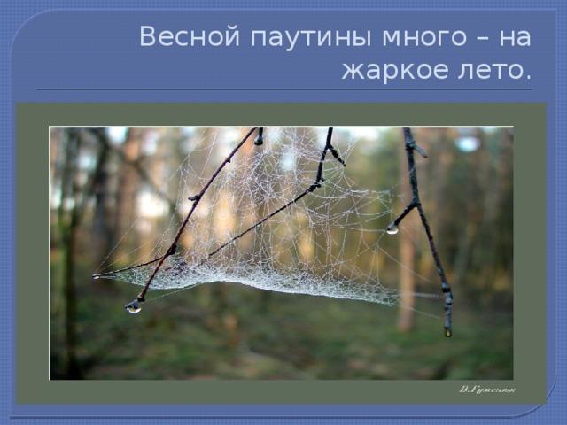 Весной паутины много – на жаркое лето.