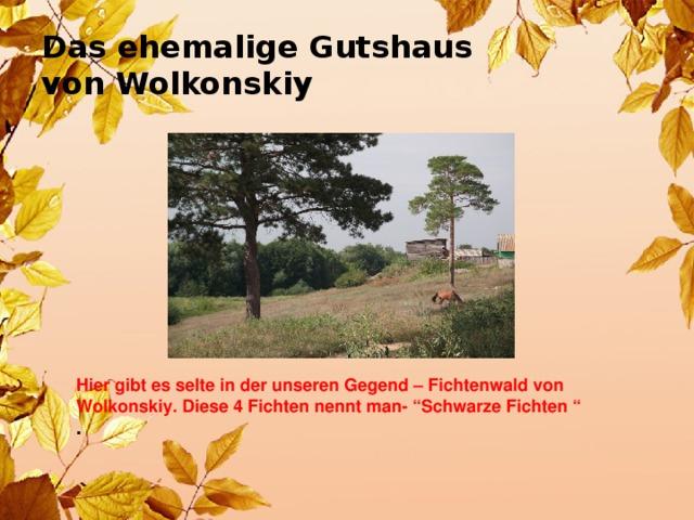 """Das ehemalige Gutshaus  von Wolkonskiy  Hier gibt es selte in der unseren Gegend – Fichtenwald von Wolkonskiy. Diese 4 Fichten nennt man- """"Schwarze Fichten """" ."""