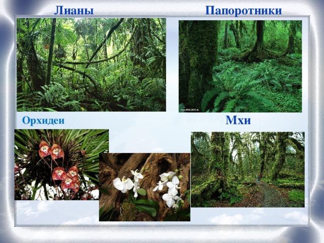 Лианы Папоротники Мхи Орхидеи
