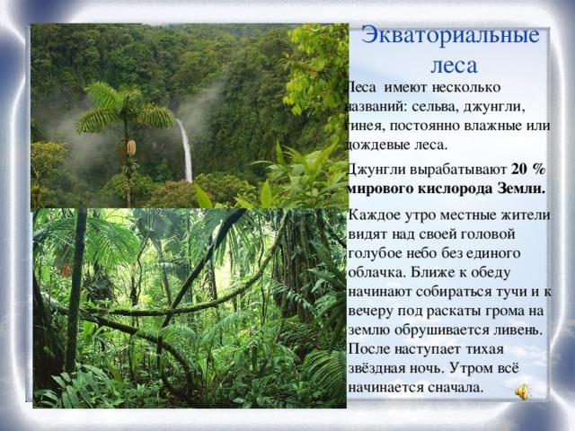 Экваториальные леса Леса имеют несколько названий: сельва, джунгли, гинея, постоянно влажные или дождевые леса. Джунгли вырабатывают 20 % мирового кислорода Земли. Каждое утро местные жители видят над своей головой голубое небо без единого облачка. Ближе к обеду начинают собираться тучи и к вечеру под раскаты грома на землю обрушивается ливень. После наступает тихая звёздная ночь. Утром всё начинается сначала.
