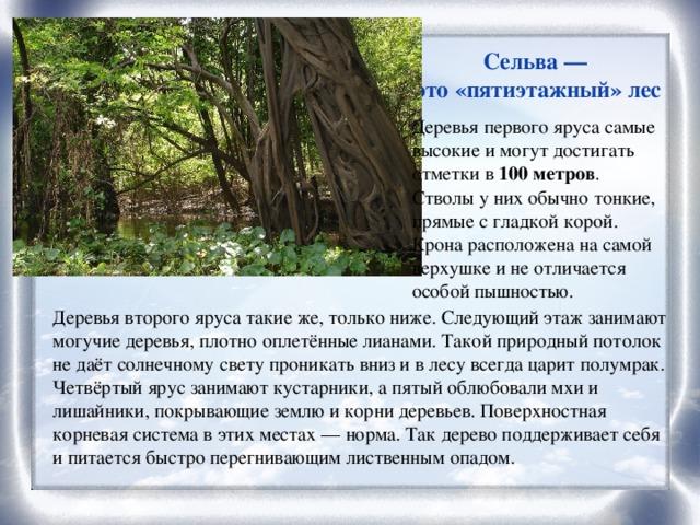 Сельва — это «пятиэтажный» лес Деревья первого яруса самые высокие и могут достигать отметки в 100 метров . Стволы у них обычно тонкие, прямые с гладкой корой. Крона расположена на самой верхушке и не отличается особой пышностью. Деревья второго яруса такие же, только ниже. Следующий этаж занимают могучие деревья, плотно оплетённые лианами. Такой природный потолок не даёт солнечному свету проникать вниз и в лесу всегда царит полумрак. Четвёртый ярус занимают кустарники, а пятый облюбовали мхи и лишайники, покрывающие землю и корни деревьев. Поверхностная корневая система в этих местах — норма. Так дерево поддерживает себя и питается быстро перегнивающим лиственным опадом.