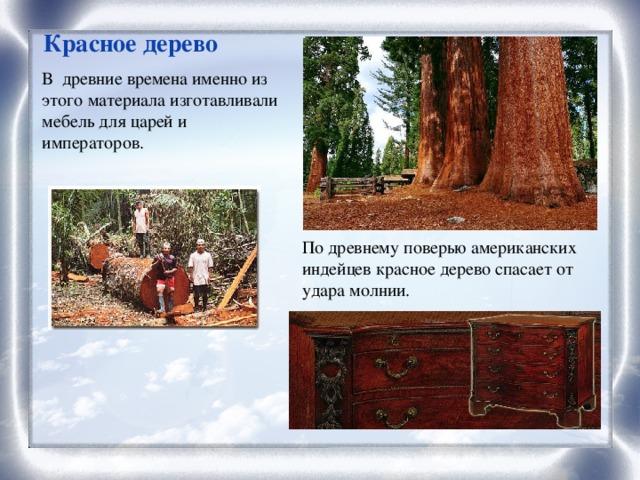 Красное дерево В древние времена именно из этого материала изготавливали мебель для царей и императоров. По древнему поверью американских индейцев красное дерево спасает от удара молнии.