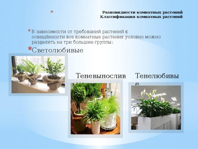 Разновидности комнатных растений  Классификация комнатных растений   В зависимости от требований растений к освещённости все комнатные растения условно можно разделить на три большие группы: Светолюбивые