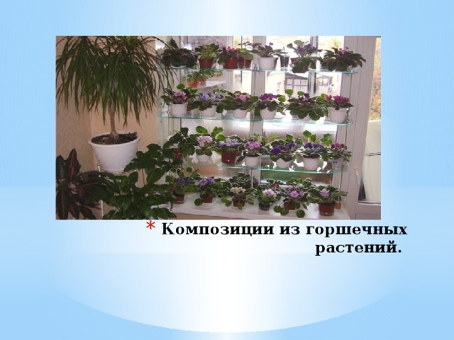 Композиции из горшечных растений.