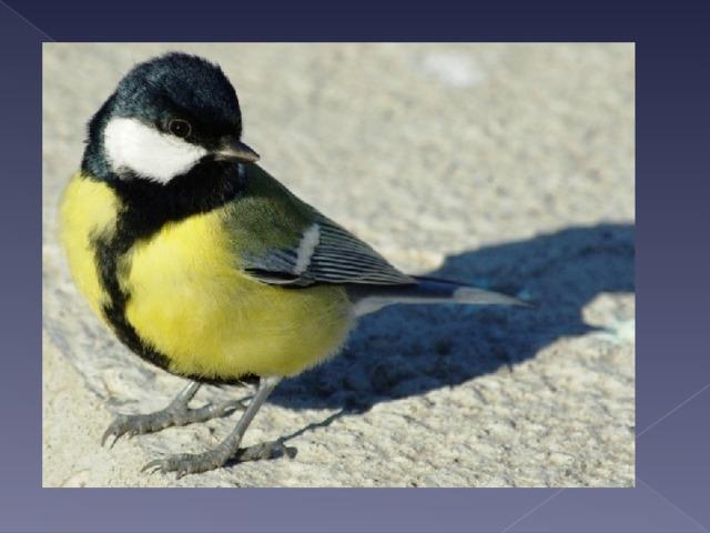 С желтой грудкой у окошка  Собирает шустро крошки  Отгадайте что за птица?  Называется …