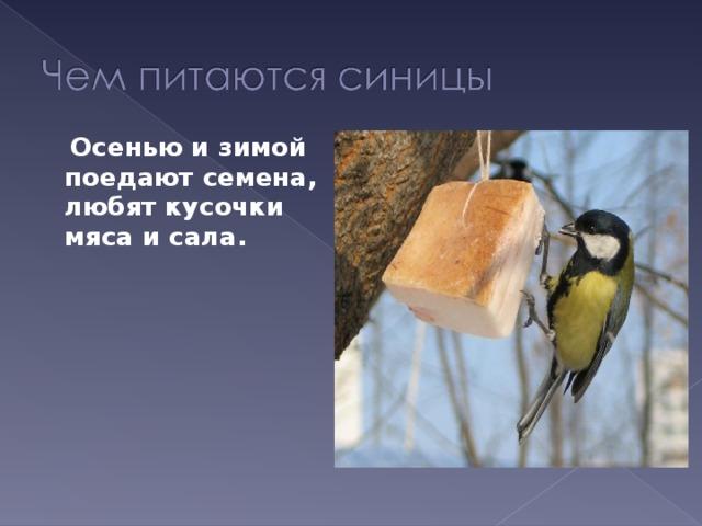 Осенью и зимой поедают семена, любят кусочки мяса и сала.