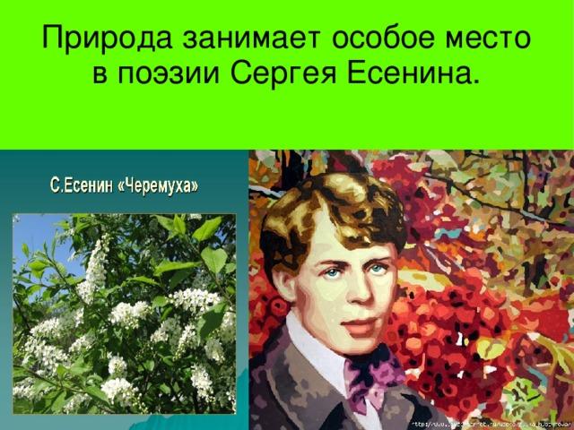 Природа занимает особое место в поэзии Сергея Есенина.