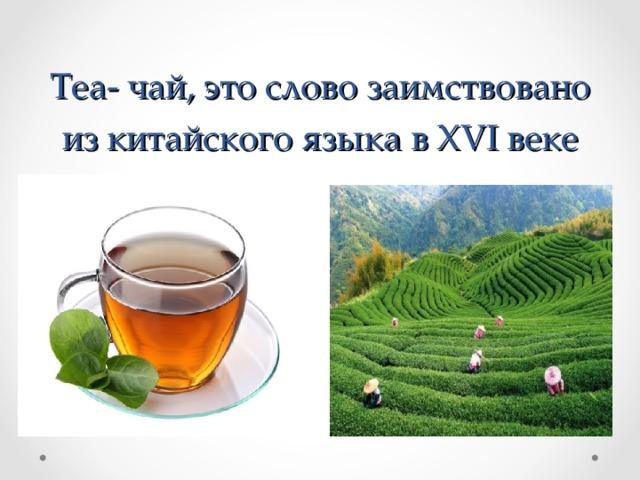 Tea - чай, это слово заимствовано из китайского языка в XVI веке