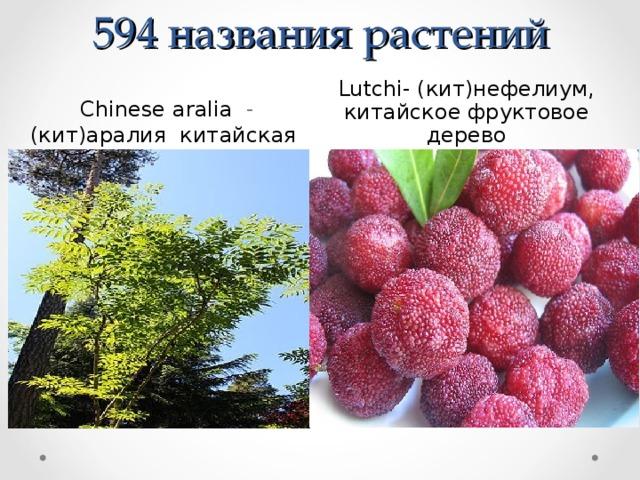 594 названия растений  Chinese  aralia -  (кит)аралия китайская Lutchi- (кит)нефелиум, китайское фруктовое дерево