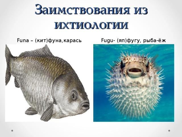 Заимствования из ихтиологии Funa – (кит)фуна,карась  Fugu- (яп)фугу, рыба-ёж