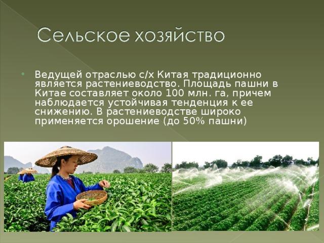 Ведущей отраслью с/х Китая традиционно является растениеводство. Площадь пашни в Китае составляет около 100 млн. га, причем наблюдается устойчивая тенденция к ее снижению. В растениеводстве широко применяется орошение (до 50% пашни)