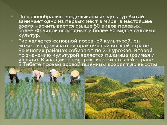 По разнообразию возделываемых культур Китай занимает одно из первых мест в мире: в настоящее время насчитывается свыше 50 видов полевых, более 80 видов огородных и более 60 видов садовых культур. Рис является основной посевной культурой, он может возделываться практически во всей стране. Во многих районах собирают по 2-3 урожая. Второй по значению культурой является пшеница (озимая и яровая). Выращивается практически по всей стране. В Тибете посевы яровой пшеницы доходят до высоты 4100 м.
