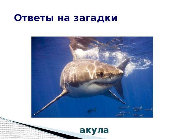 Ответы на загадки акула