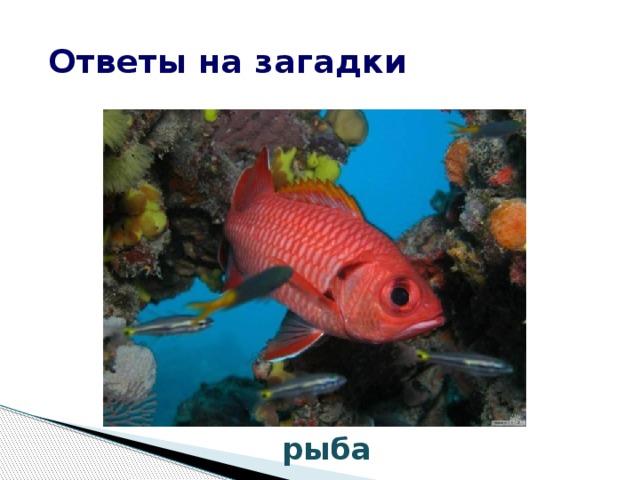 Ответы на загадки рыба
