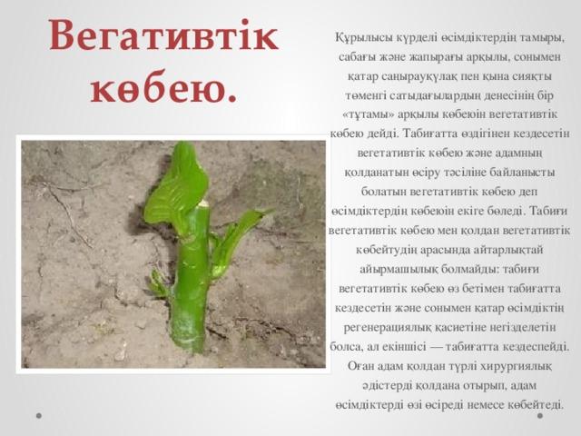 Вегативтік көбею. Құрылысы күрделі өсімдіктердің тамыры, сабағы және жапырағы арқылы, сонымен қатар саңырауқүлақ пен қына сияқты төменгі сатыдағылардың денесінің бір «тұтамы» арқылы көбеюін вегетативтік көбею дейді.Табиғатта өздігінен кездесетін вегетативтік көбею және адамның қолданатын өсіру тәсіліне байланысты болатын вегетативтік көбею деп өсімдіктердің көбеюін екіге бөледі. Табиғи вегетативтік көбею мен қолдан вегетативтік көбейтудің арасында айтарлықтай айырмашылық болмайды: табиғи вегетативтік көбею өз бетімен табиғатта кездесетін және сонымен қатар өсімдіктің регенерациялық қасиетіне негізделетін болса, ал екіншісі — табиғатта кездеспейді. Оған адам қолдан түрлі хирургиялық әдістерді қолдана отырып, адам өсімдіктерді өзі өсіреді немесе көбейтеді.