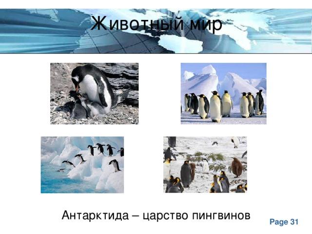 Животный мир Антарктида – царство пингвинов