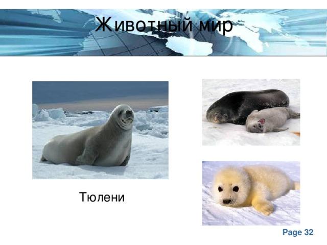 Животный мир Тюлени