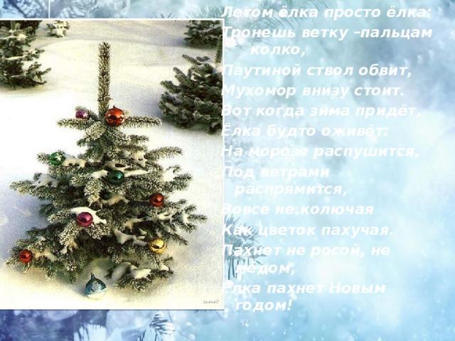 Летом ёлка просто ёлка: Тронешь ветку –пальцам колко, Паутиной ствол обвит, Мухомор внизу стоит. Вот когда зима придёт, Ёлка будто оживёт: На морозе распушится, Под ветрами распрямится, Вовсе не колючая Как цветок пахучая. Пахнет не росой, не мёдом, Ёлка пахнет Новым годом!