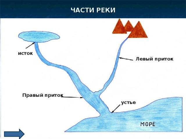 ЧАСТИ РЕКИ ОЗЕРО ГОРЫ ИСТОК исток Левый приток Правый приток ГЛАВНОЕ РУСЛО устье УСТЬЕ