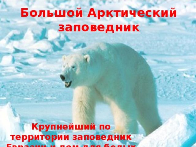 Большой Арктический заповедник Крупнейший по территории заповедник Евразии и дом для белых медведей