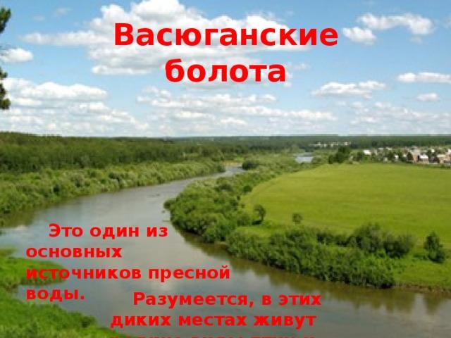 Васюганские болота   Это один из основных источников пресной воды.   Разумеется, в этих диких местах живут редкие виды птиц и животных.