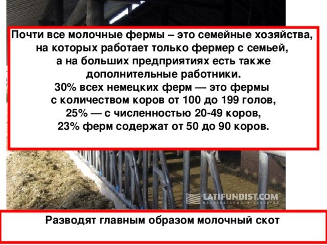 Почти все молочные фермы – это семейные хозяйства, на которых работает только фермер с семьей, а на больших предприятиях есть также дополнительные работники. 30% всех немецких ферм — это фермы с количеством коров от 100 до 199 голов, 25% — с численностью 20-49 коров, 23% ферм содержат от 50 до 90 коров.  Разводят главным образом молочный скот